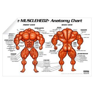 MUSCLEHEDZ Anatomy Chart Wall Decal