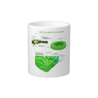 Simplified C4 Photosynthesis Diagram Extra Large Mug