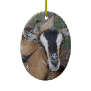 Alpine Oberhasli goat cross young does kids Ornaments
