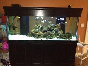 210 gallon aquarium for sale - home images 210 gallon aquarium for sale 210 gallon aquarium for ...