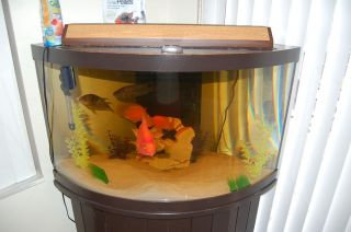 54 gallon corner fish tank for 55 gallon corner fish tank