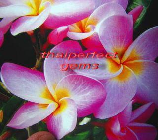"""Plumeria Frangipani Plants """"Mysweet"""" 50 Seeds"""