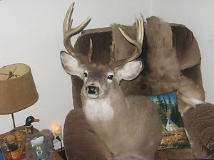 Awesome 10 Point Whitetail Buck Mount Deer Antler Sheds Taxidermy