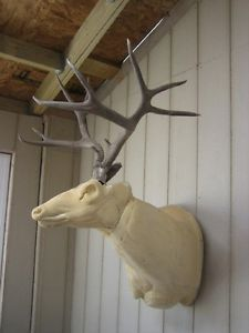Awesome 6x5 Double Flyer Mule Deer Rack Antlers Whitetail Elk Sheds Taxidermy