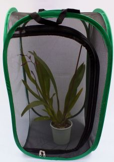Praying Mantis Stick Insect Tarantula Spider Habitat Tank Enclosure Cage