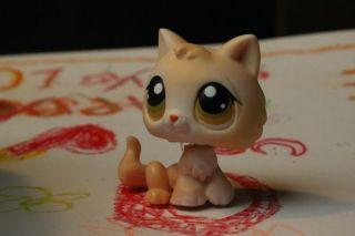 C4 Happy Littlest Pet Shop LPS 293 Cream Tan Persian Cat Kitten Hazel ...