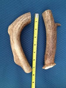 2 Large Breed Dog Whitetail Deer Antler Chews Toys Treats Knife Handles