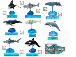 Dolphin 4D 3D Marine Sea Animal Puzzle Buy 4 Get 1