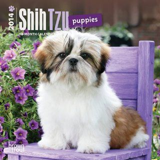 Shih Tzu Puppies   2014 Mini Calendar