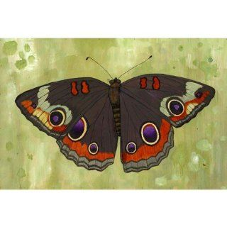 Oopsy daisy Buckeye Butterfly by Kate Halpin, 30x20 in : Nursery Wall Decor : Baby