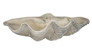 Large Clam Shell   Garden Statues