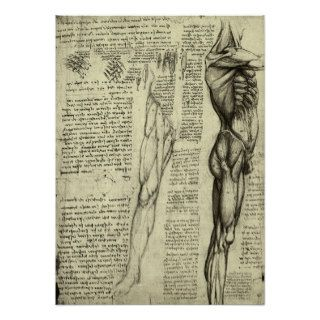 Male Muscle Anatomy Sketch by Leonardo da Vinci Posters