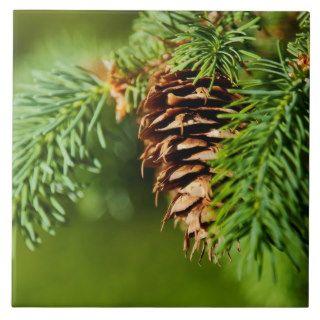 Christmas Evergreen Pine Cone Needles Tree Trees Tiles